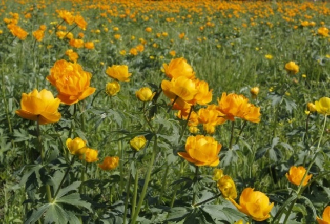 C:\Users\User\YandexDisk\Тексты дубляж Main\4. Flowering tours\Picture\image011.jpg