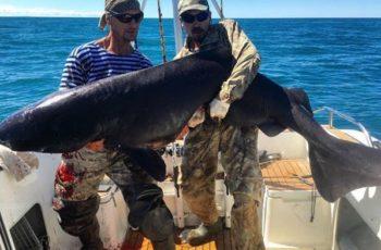 Ловля акул на Камчатке