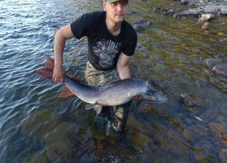Промысловые рыбы в Хабаровском крае